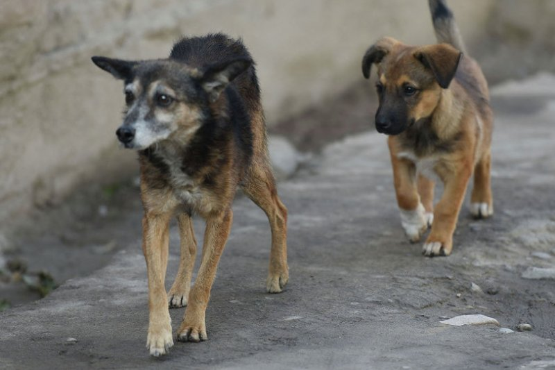 Россиянка завещала свой дом бездомным собакам